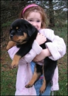 Adorable Rottweiler Puppies For Adoption.