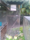 Large cages, monkeys, birds reptile