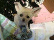 10-weeks-old-male-and-female-fennec-fox-for-sale-now
