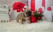 Cute french bulldogs for rehome for best homes