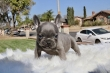 French Bulldog farm,rehoming to caring homes only